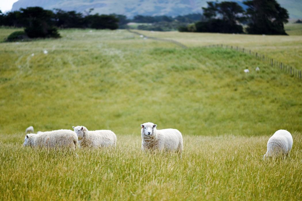 世界一周の1カ国目はニュージーランド