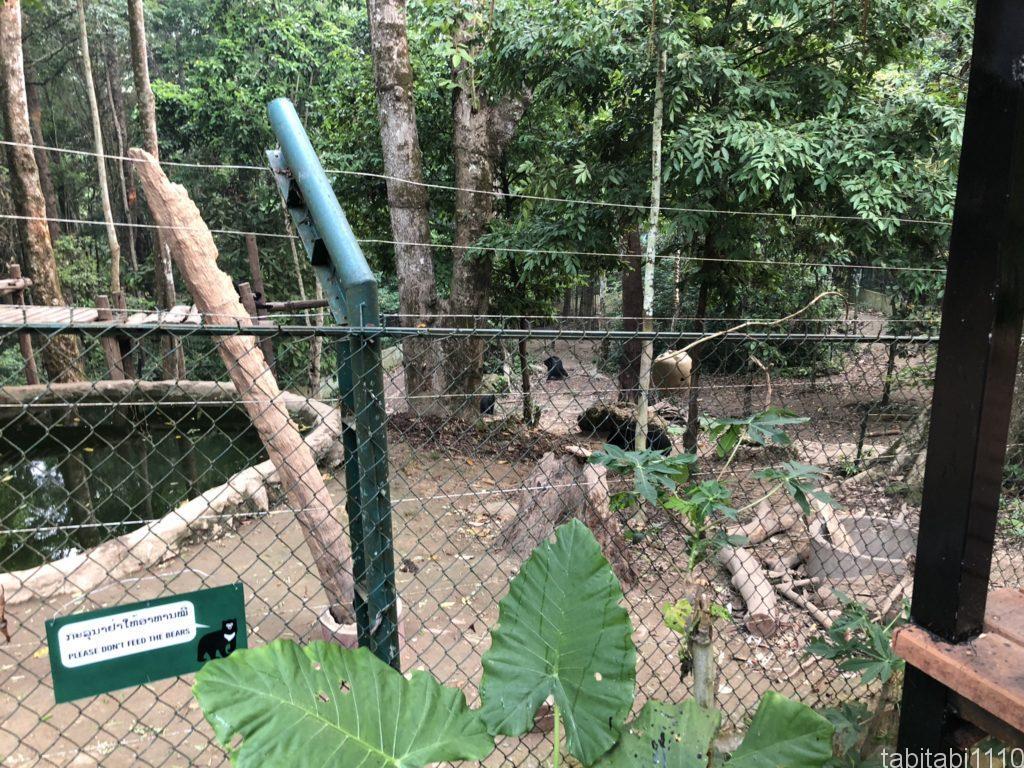 クアンシーの滝にいる熊さん