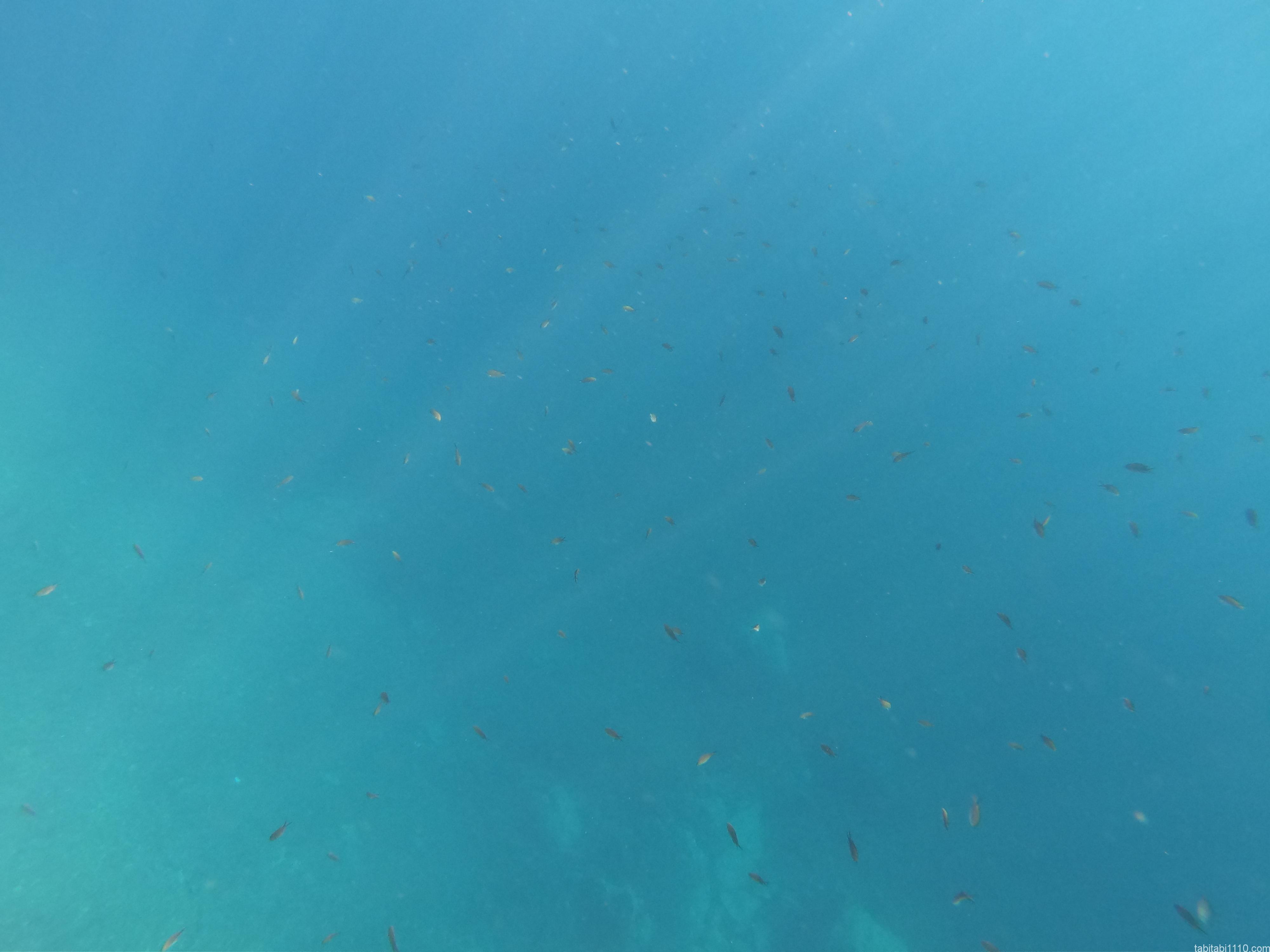 ドゥブロブニク|海中