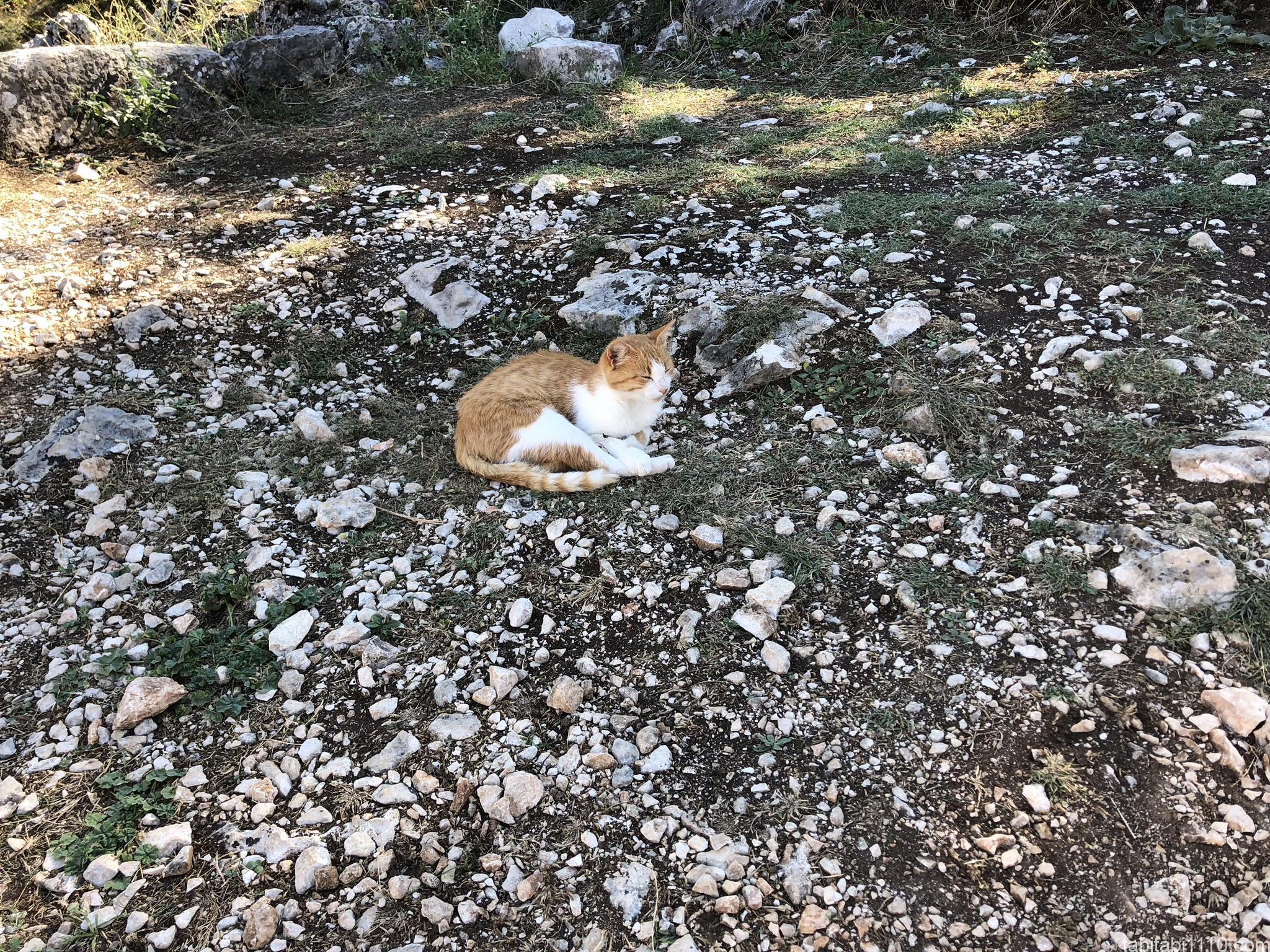 コトル|展望台までの登山|猫