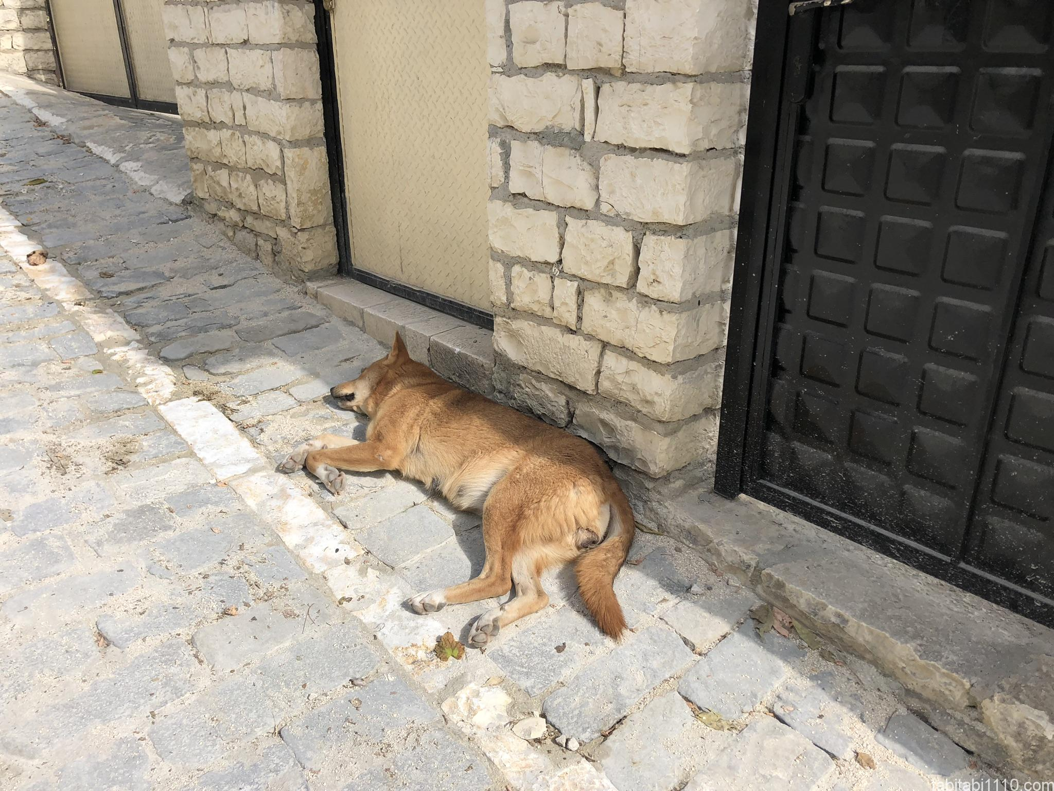 ベラト|野良犬