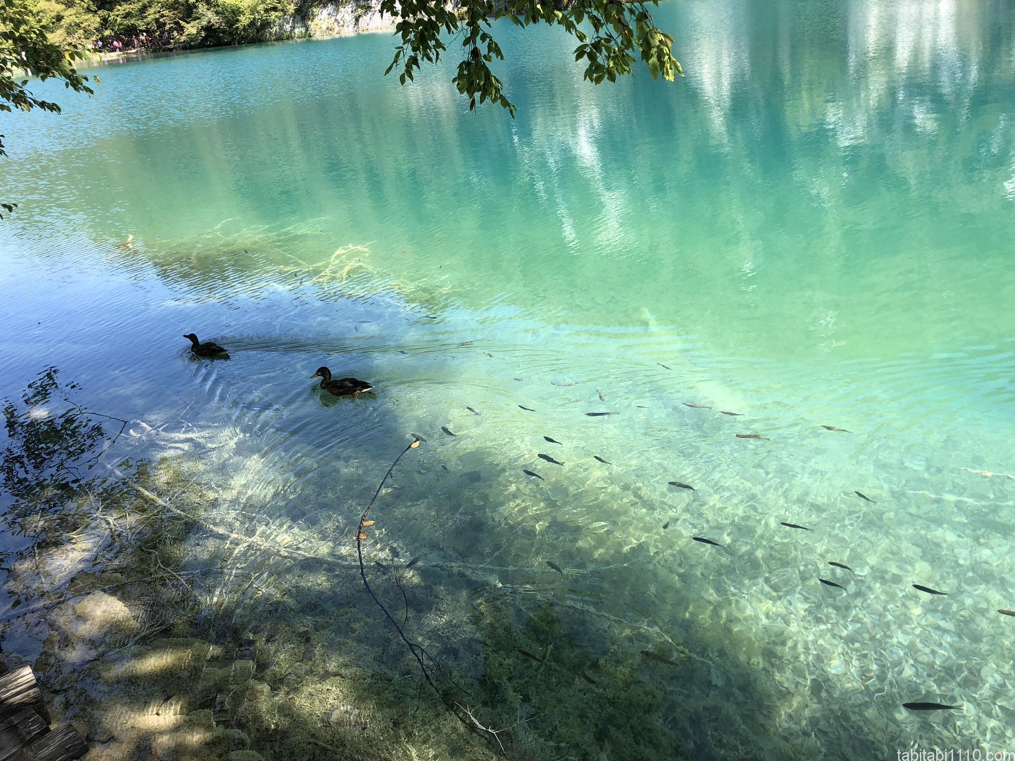 プリトヴィッチェ湖群国立公園|下湖8