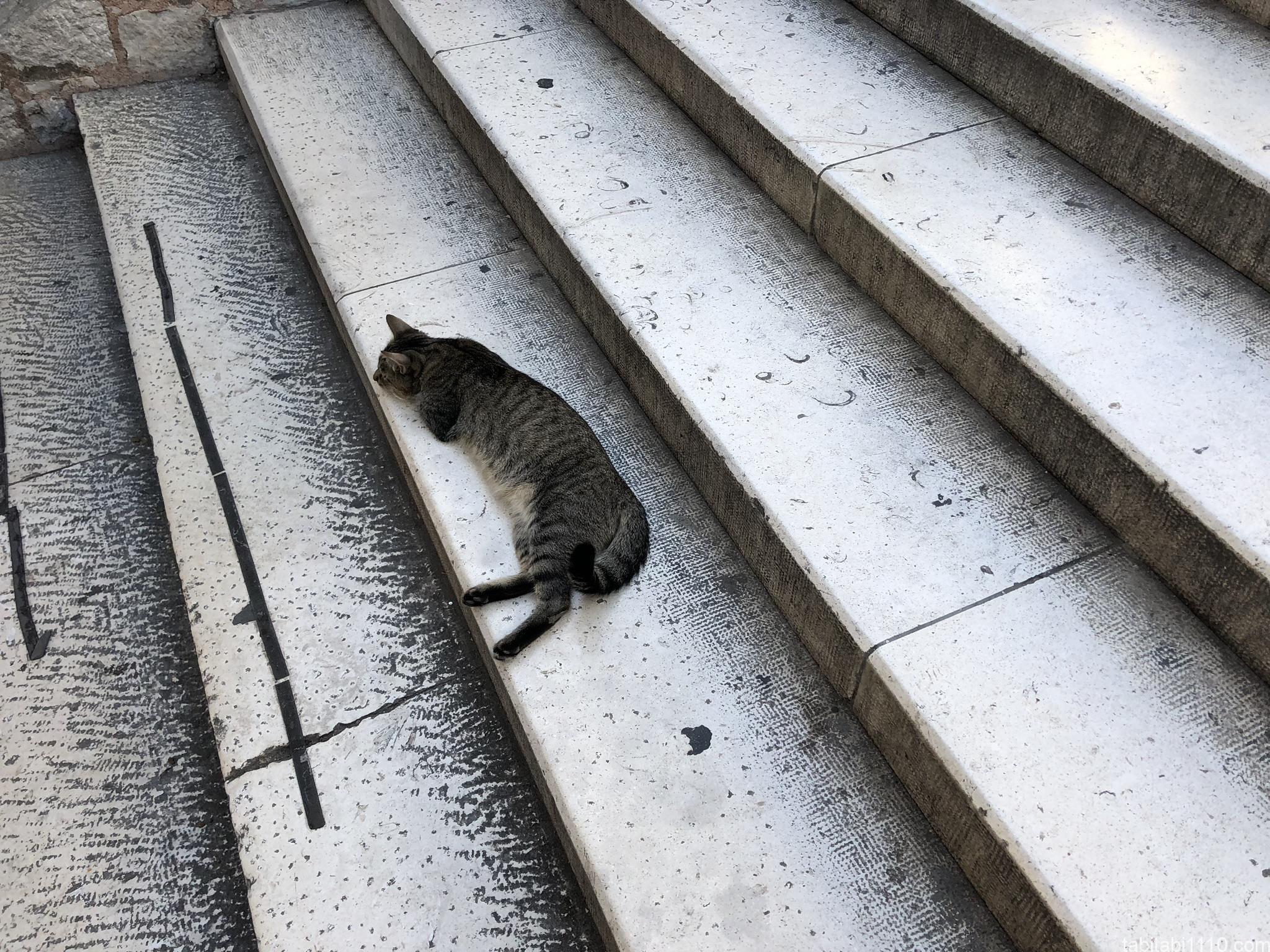 スプリット|猫