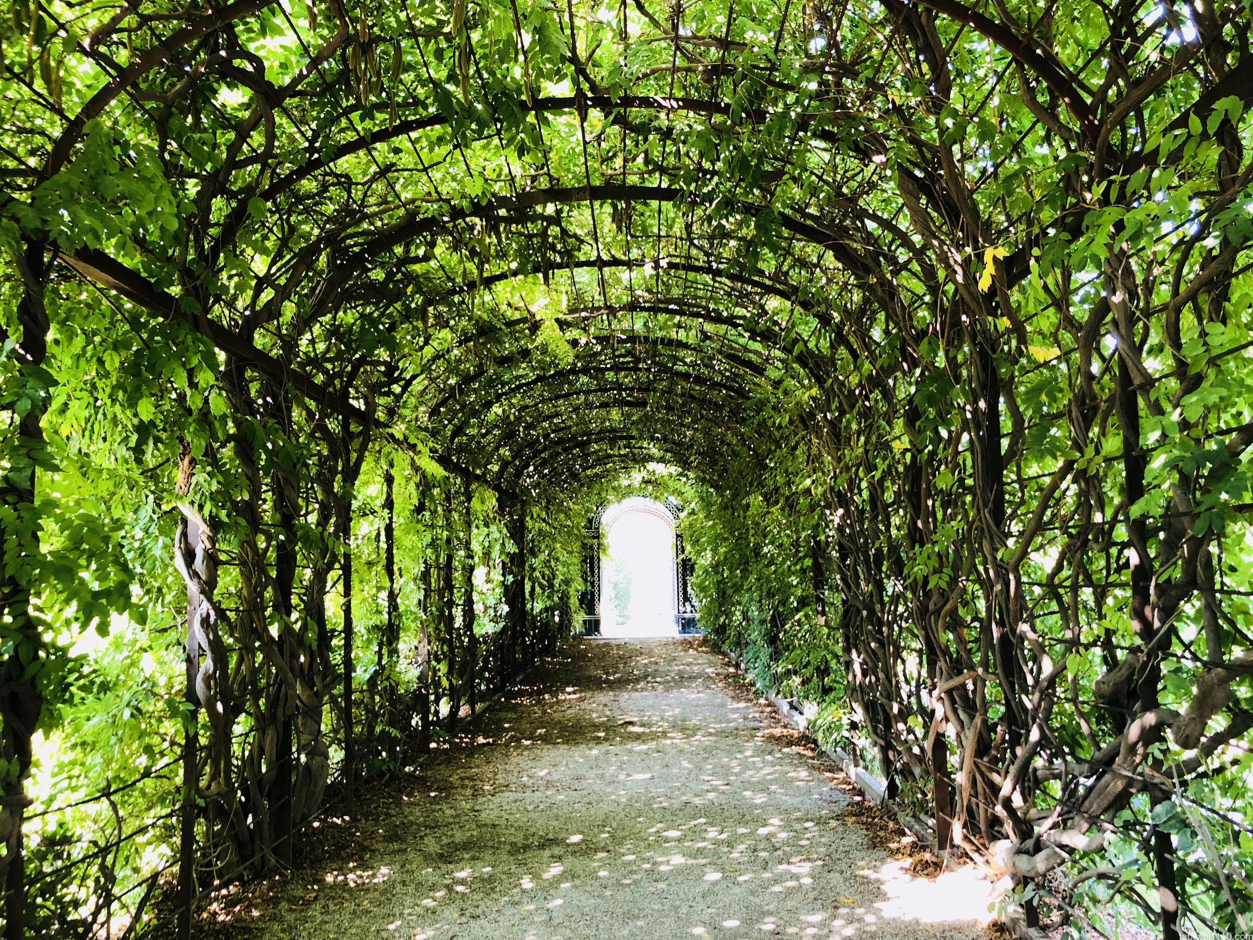 シェーンブルン宮殿|庭園