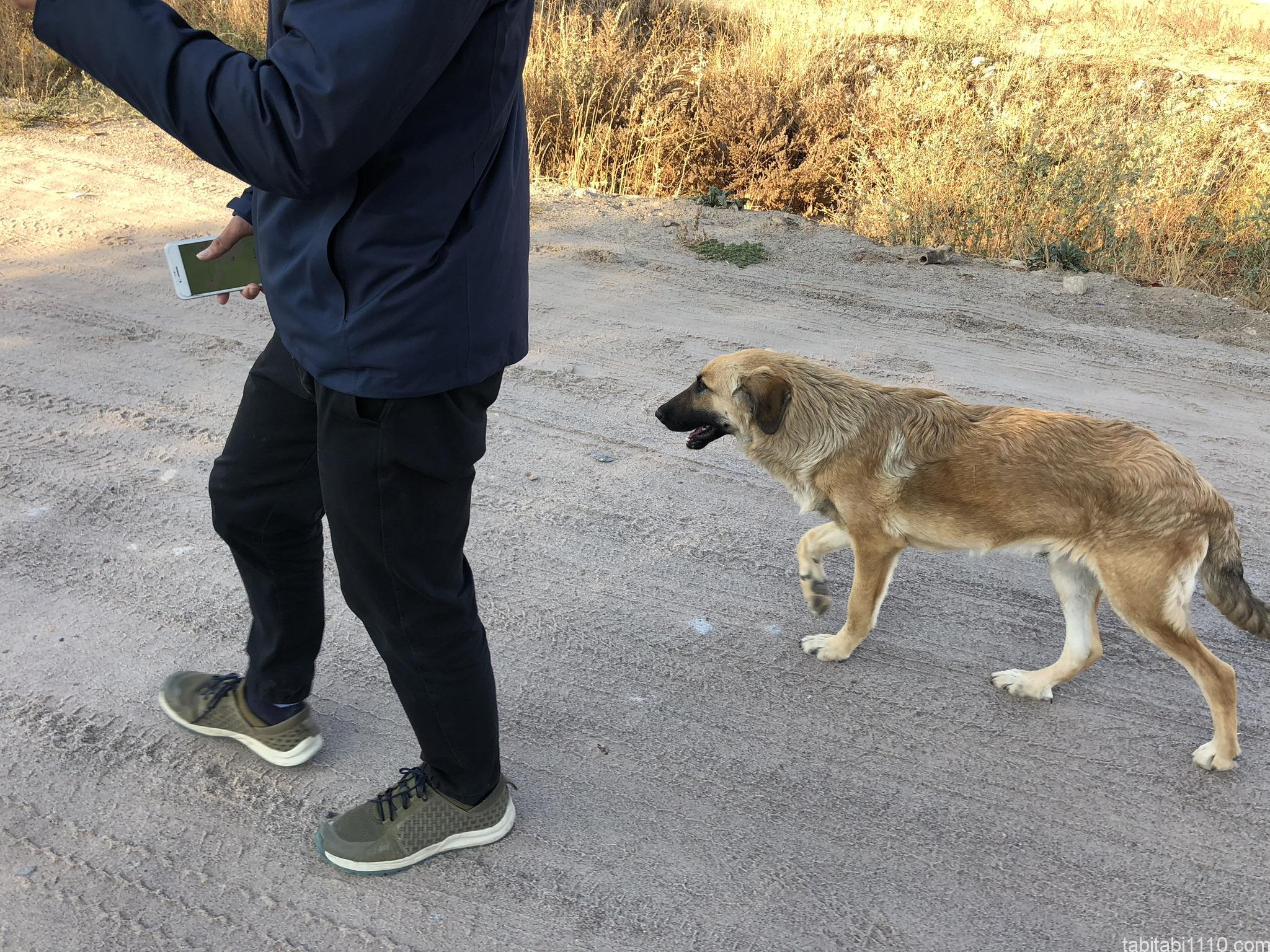 カッパドキアの犬