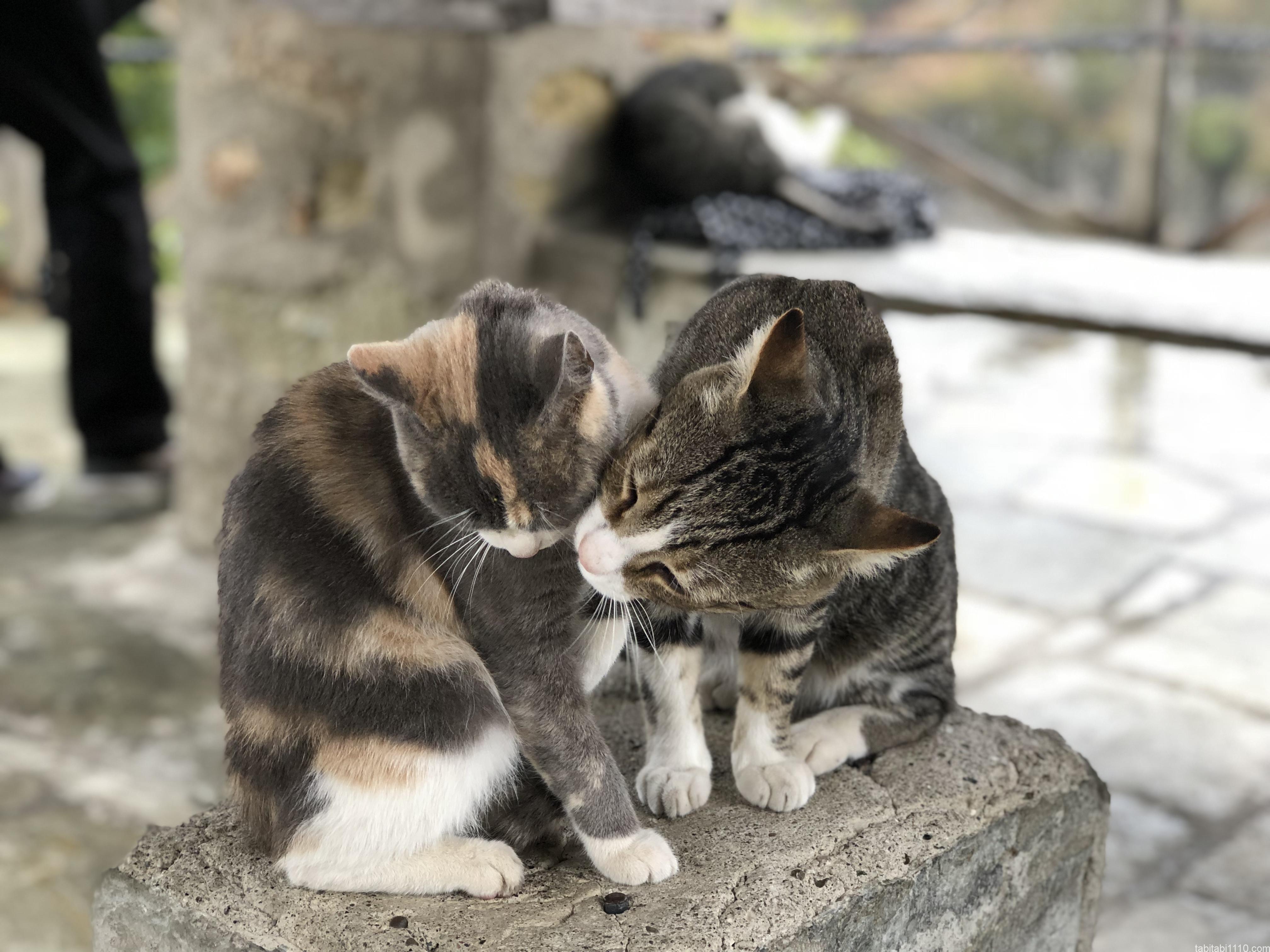 メテオラ|猫③