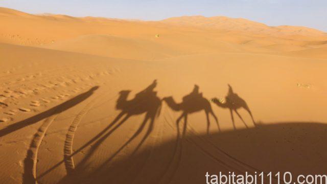 サハラ砂漠ツアー|ラクダの隊列
