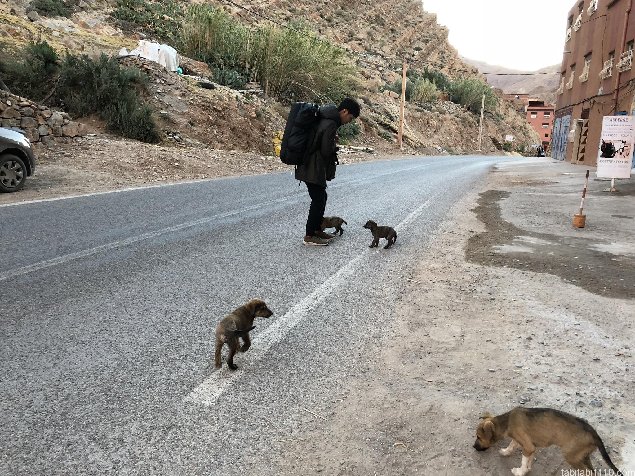 トドラ渓谷で野犬に囲まれる