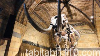 自然史博物館|マンモス