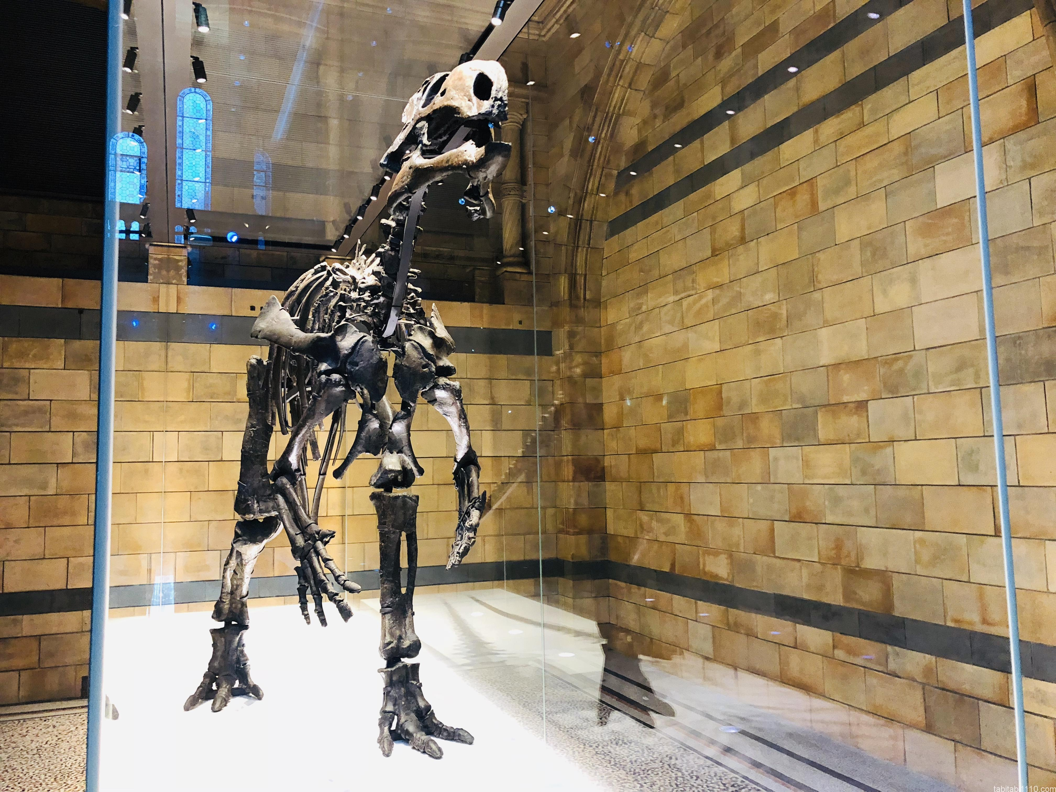 自然史博物館|恐竜
