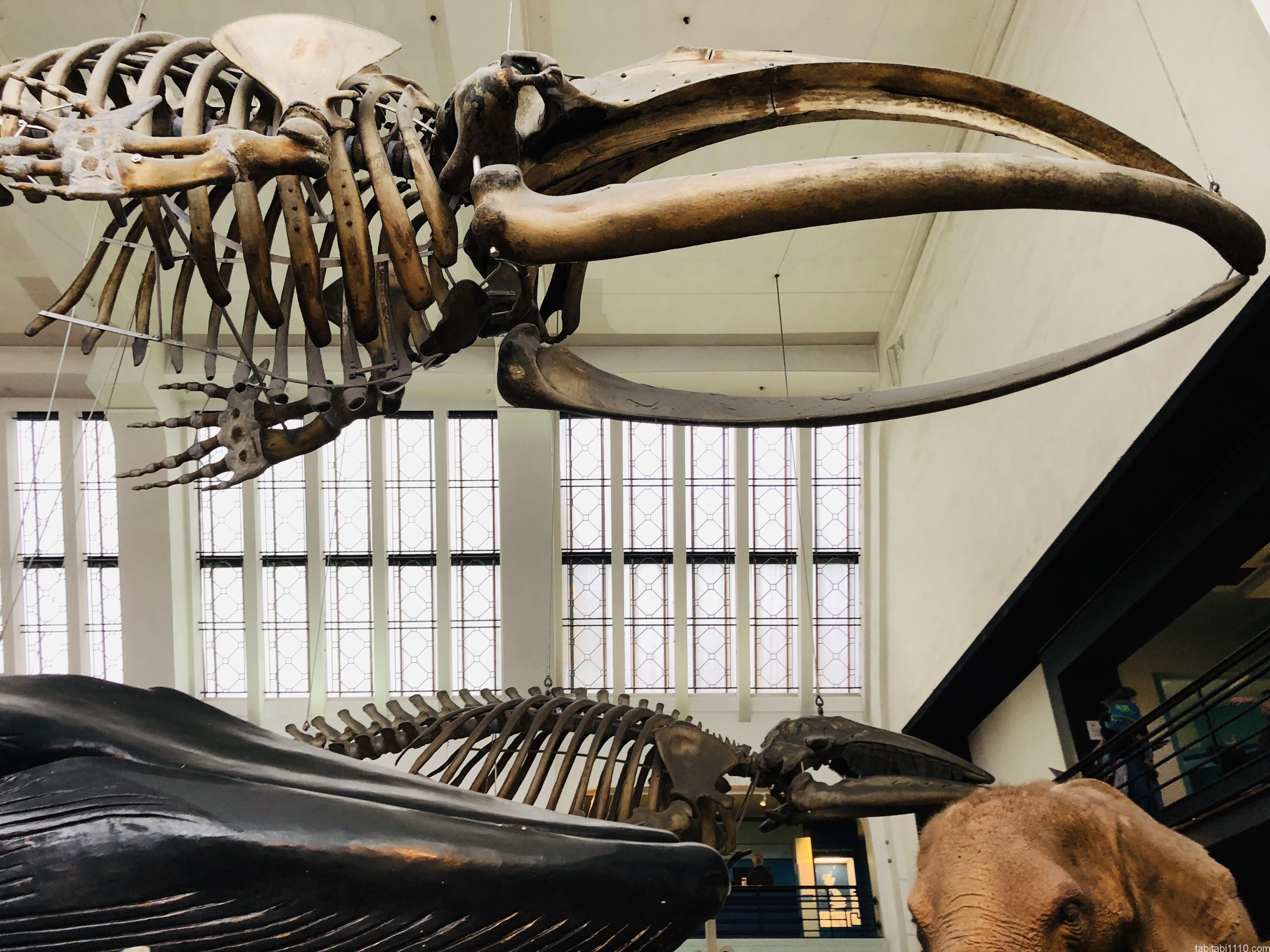 自然史博物館|海洋生物