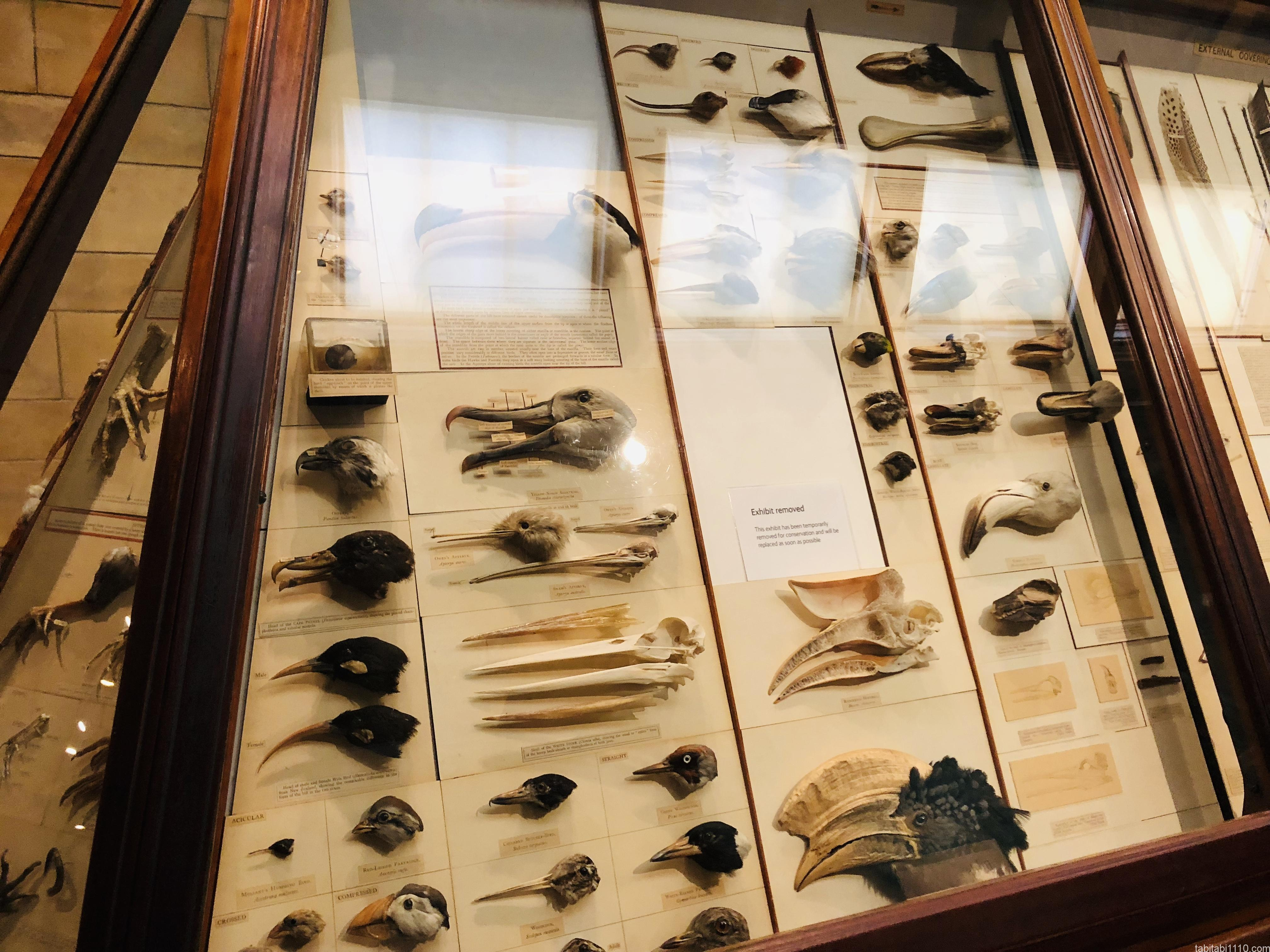 自然史博物館|鳥類標本
