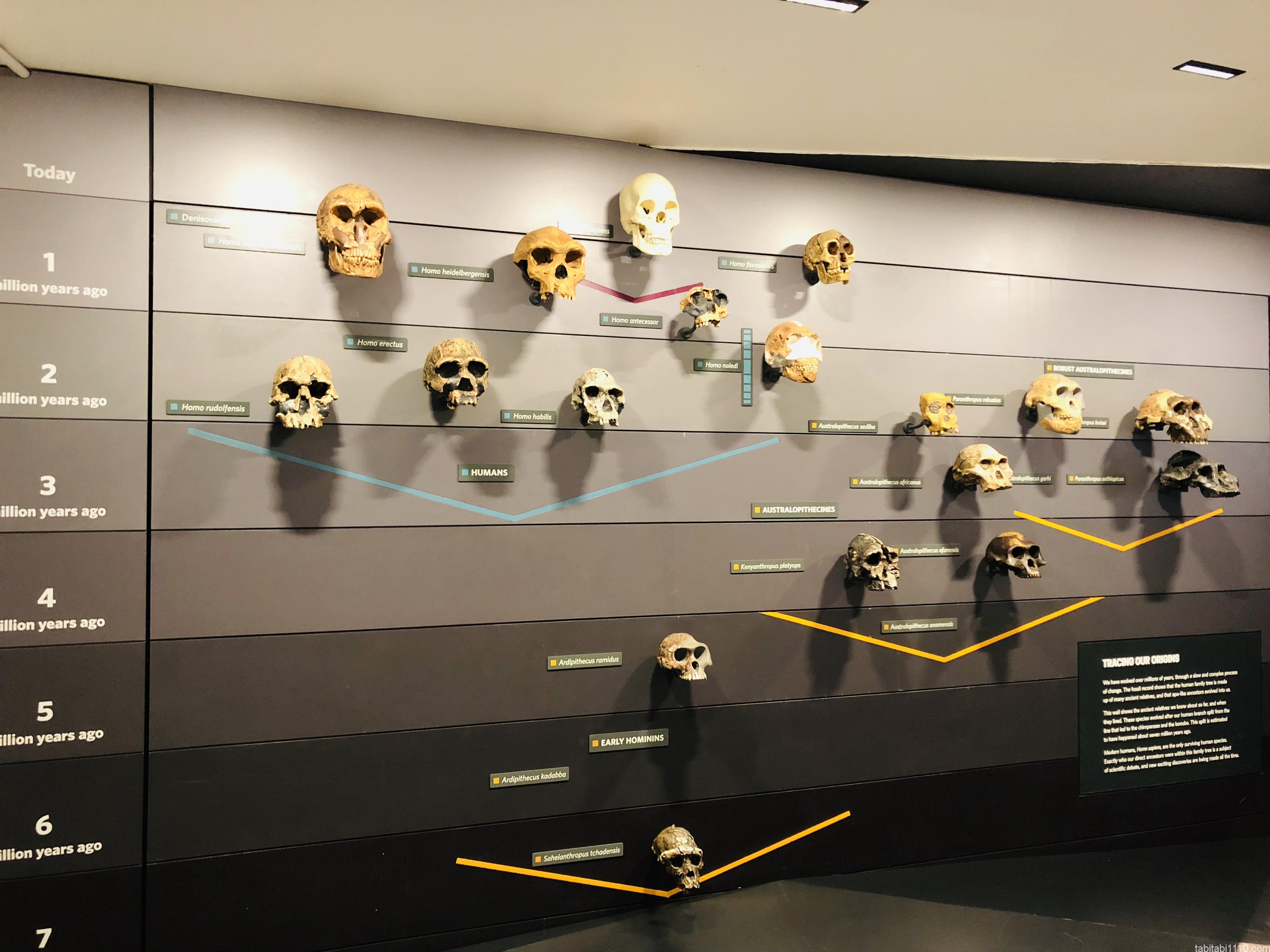 自然史博物館|人類の歴史