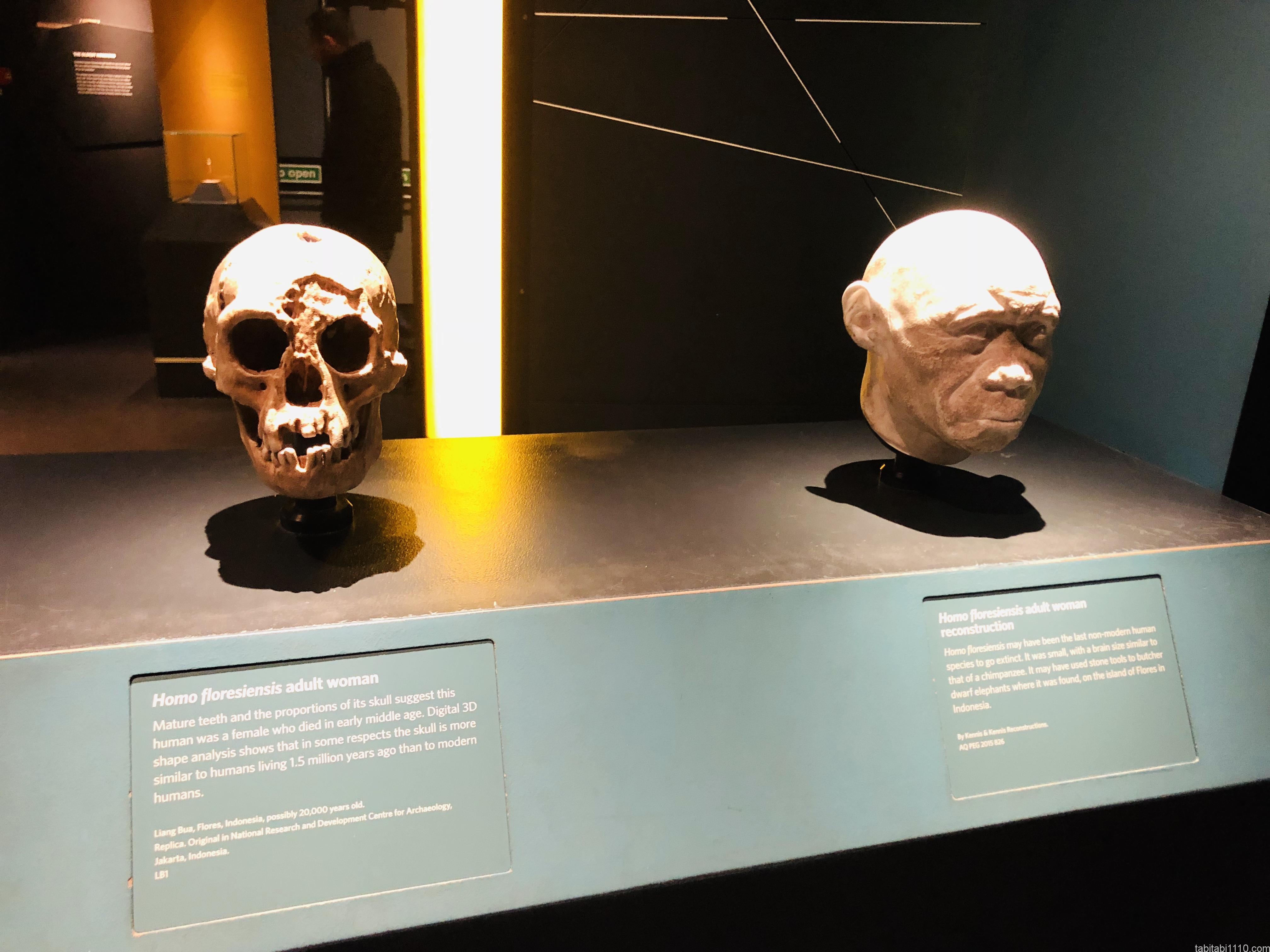 自然史博物館|ホモフローレンス