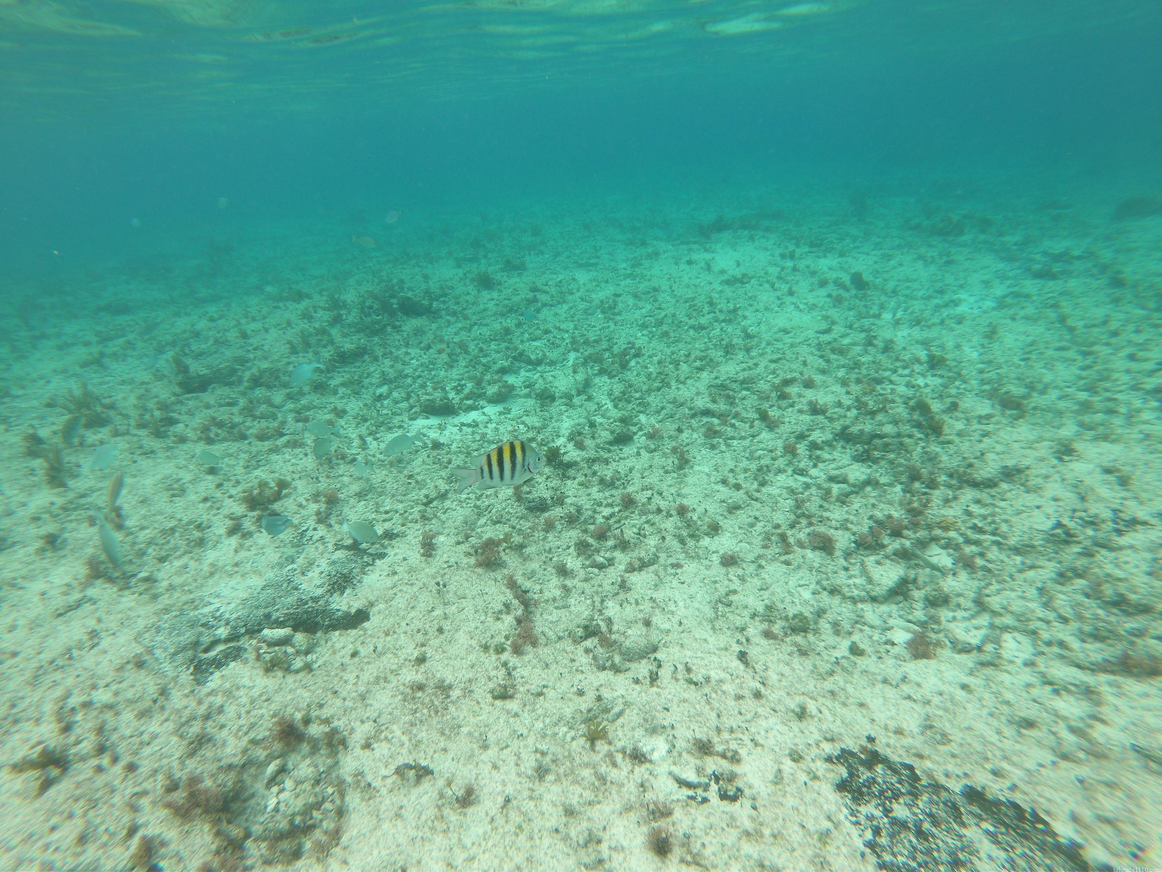 コスメル島|シュノーケリング