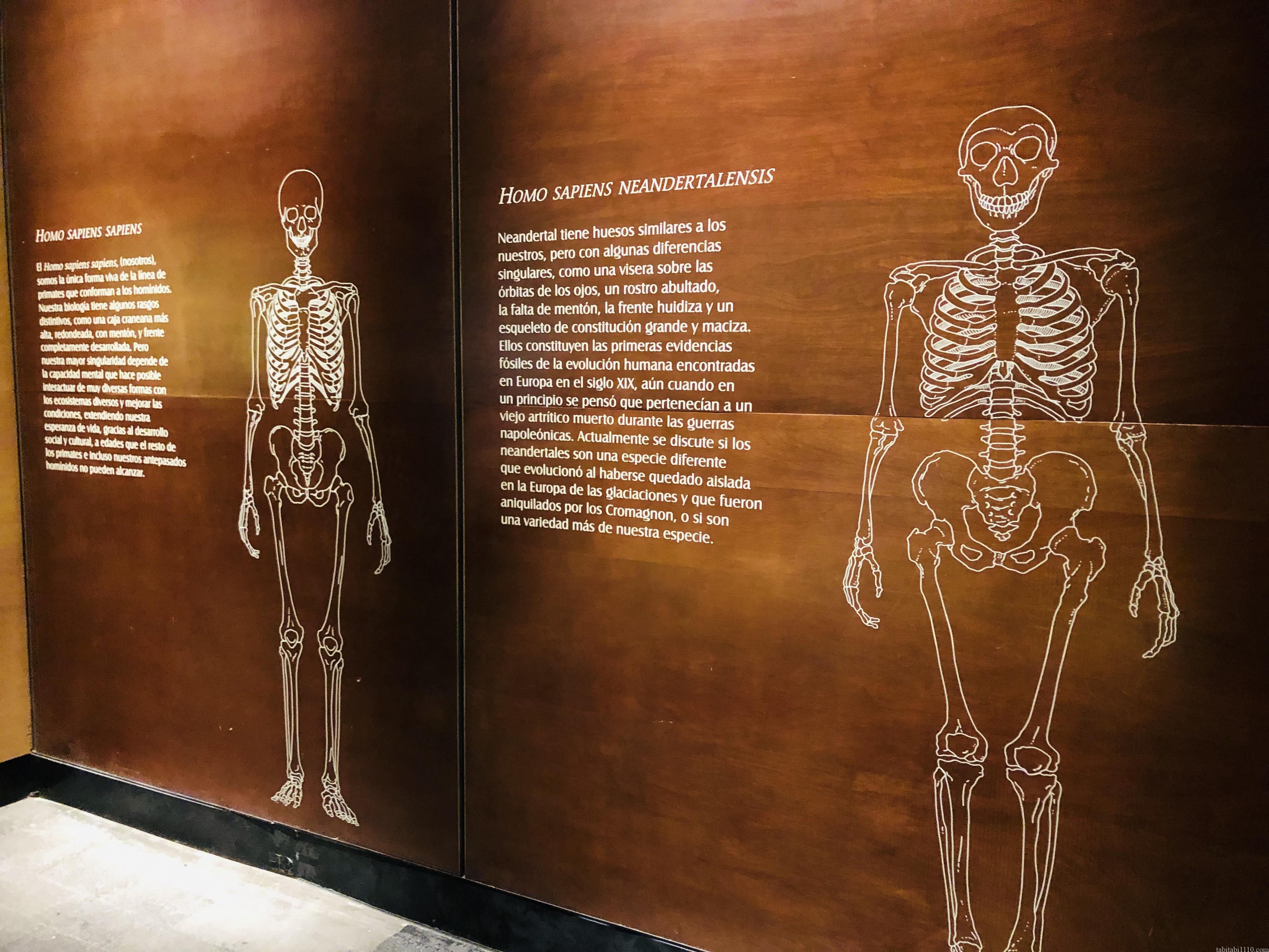 国立人類学博物館|ホモ