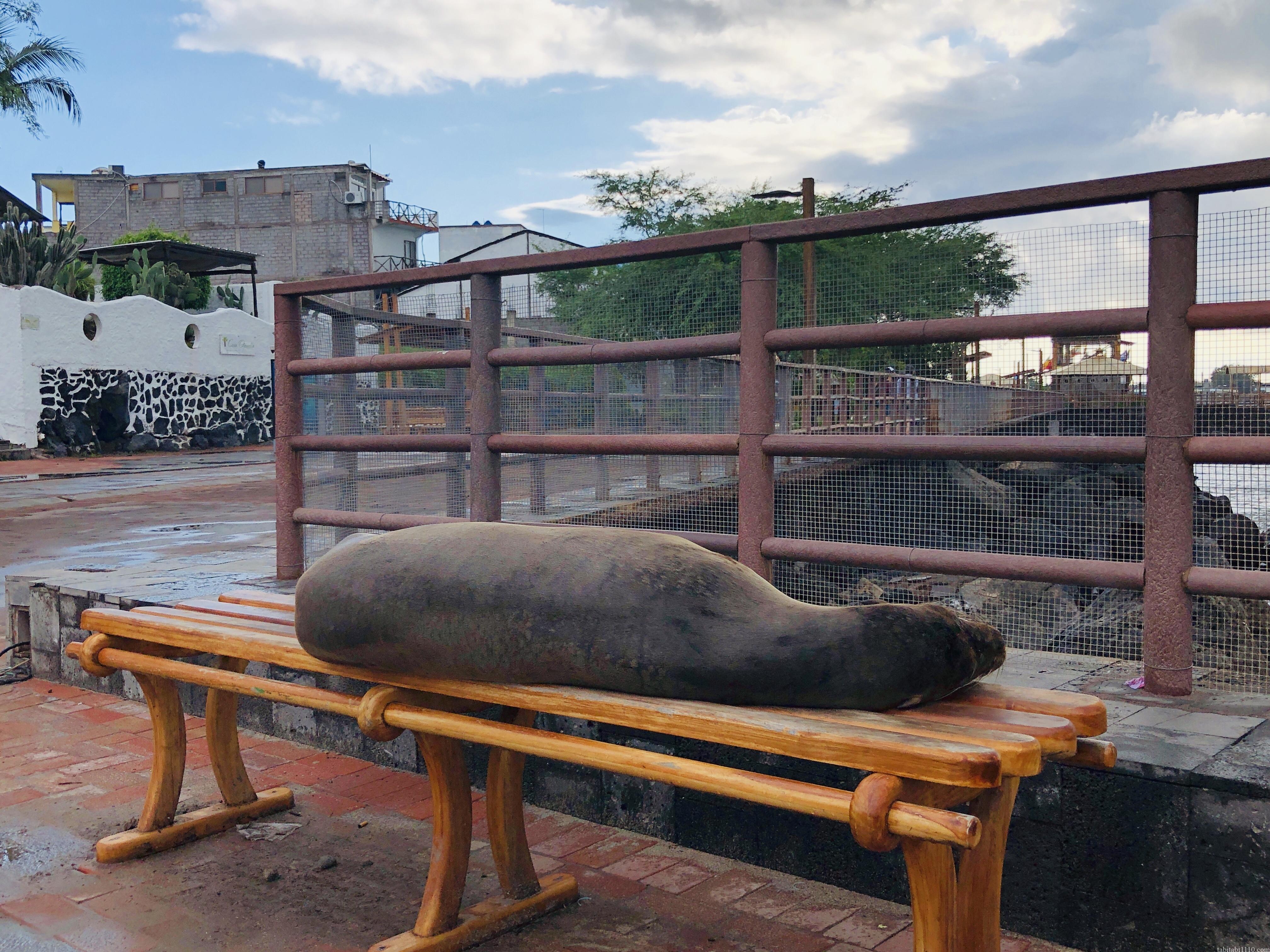 サンクリストバル島のアシカ