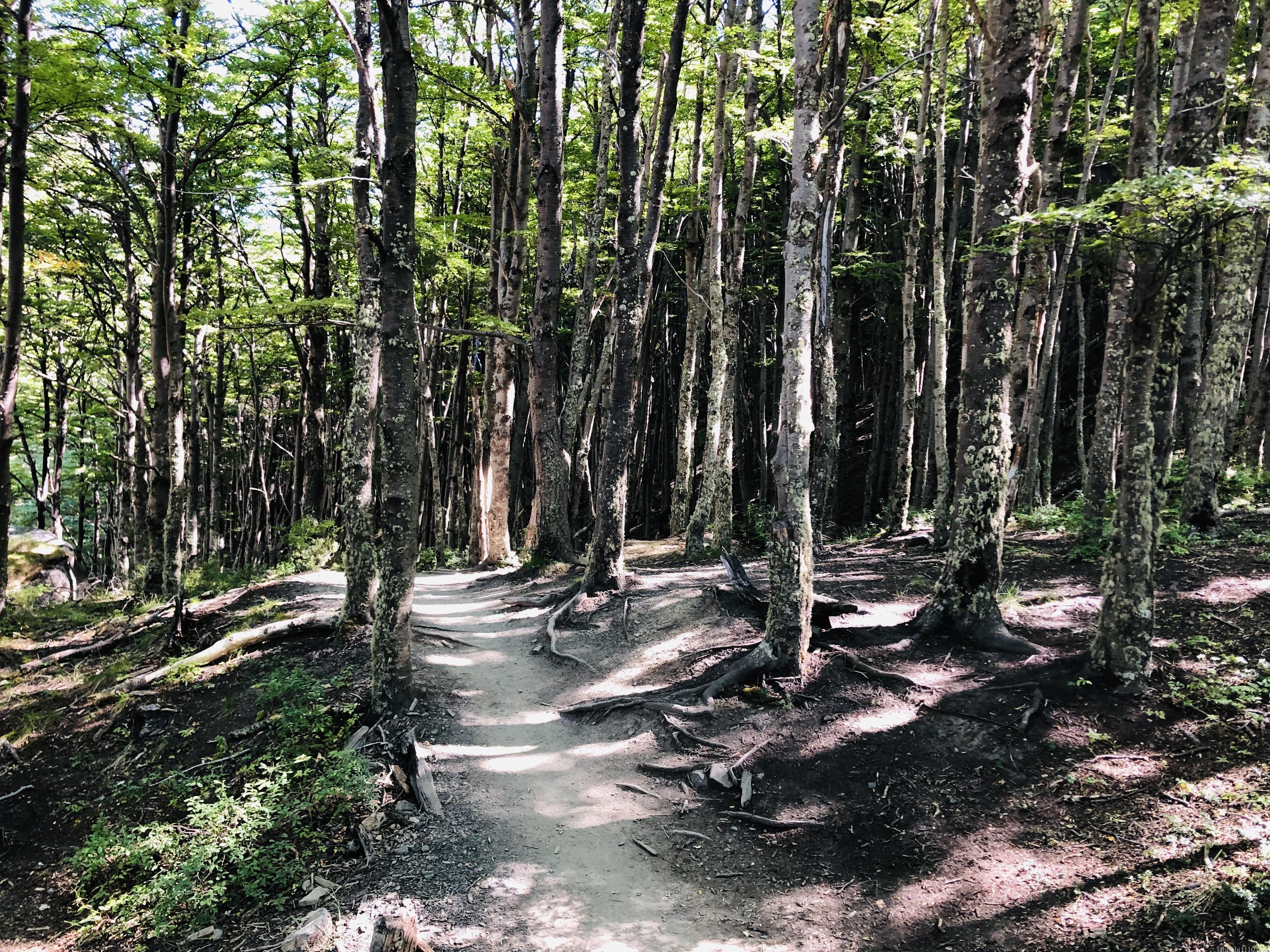 パイネ国立公園|トレッキング