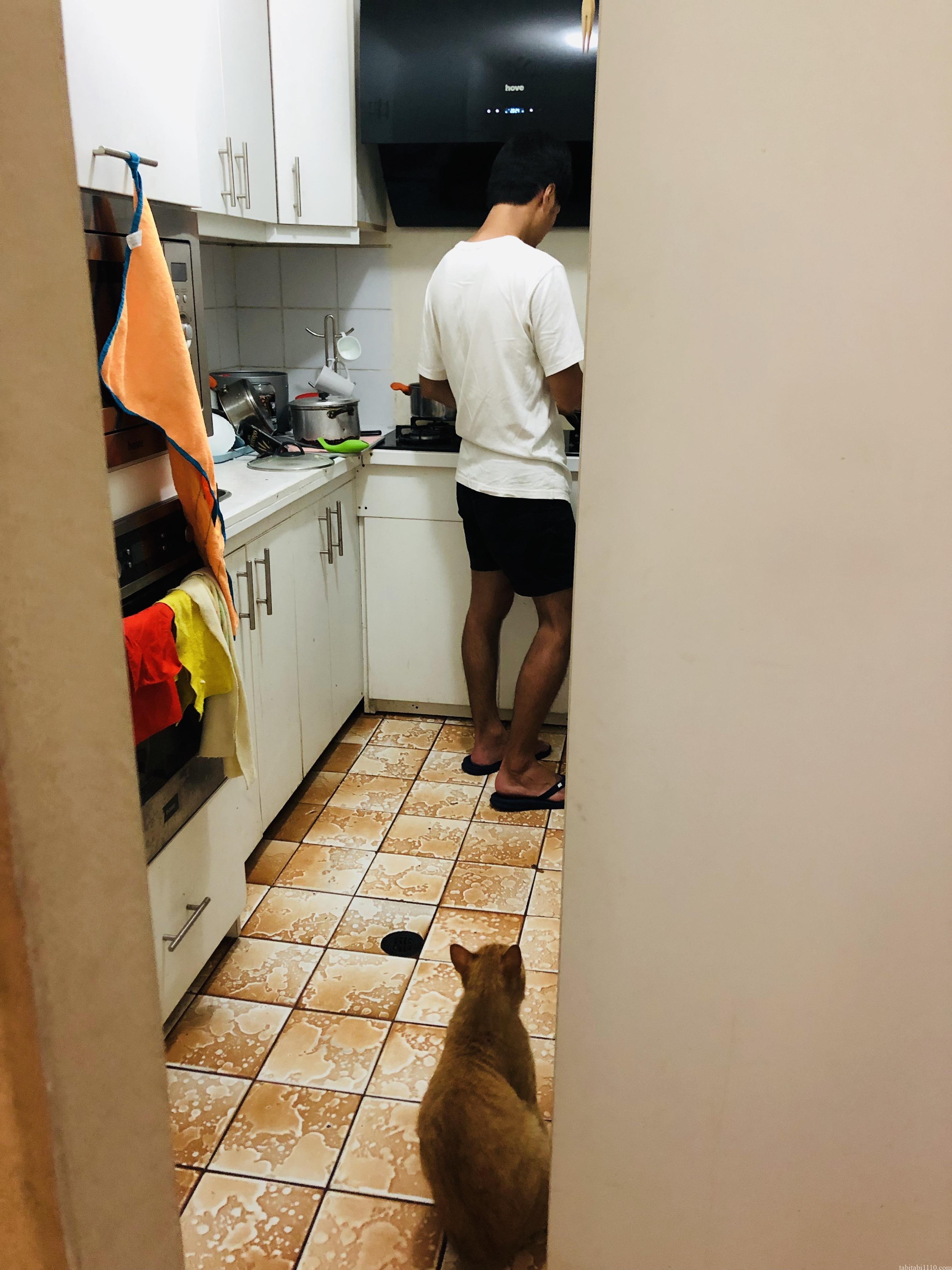 調理する彼を見る猫