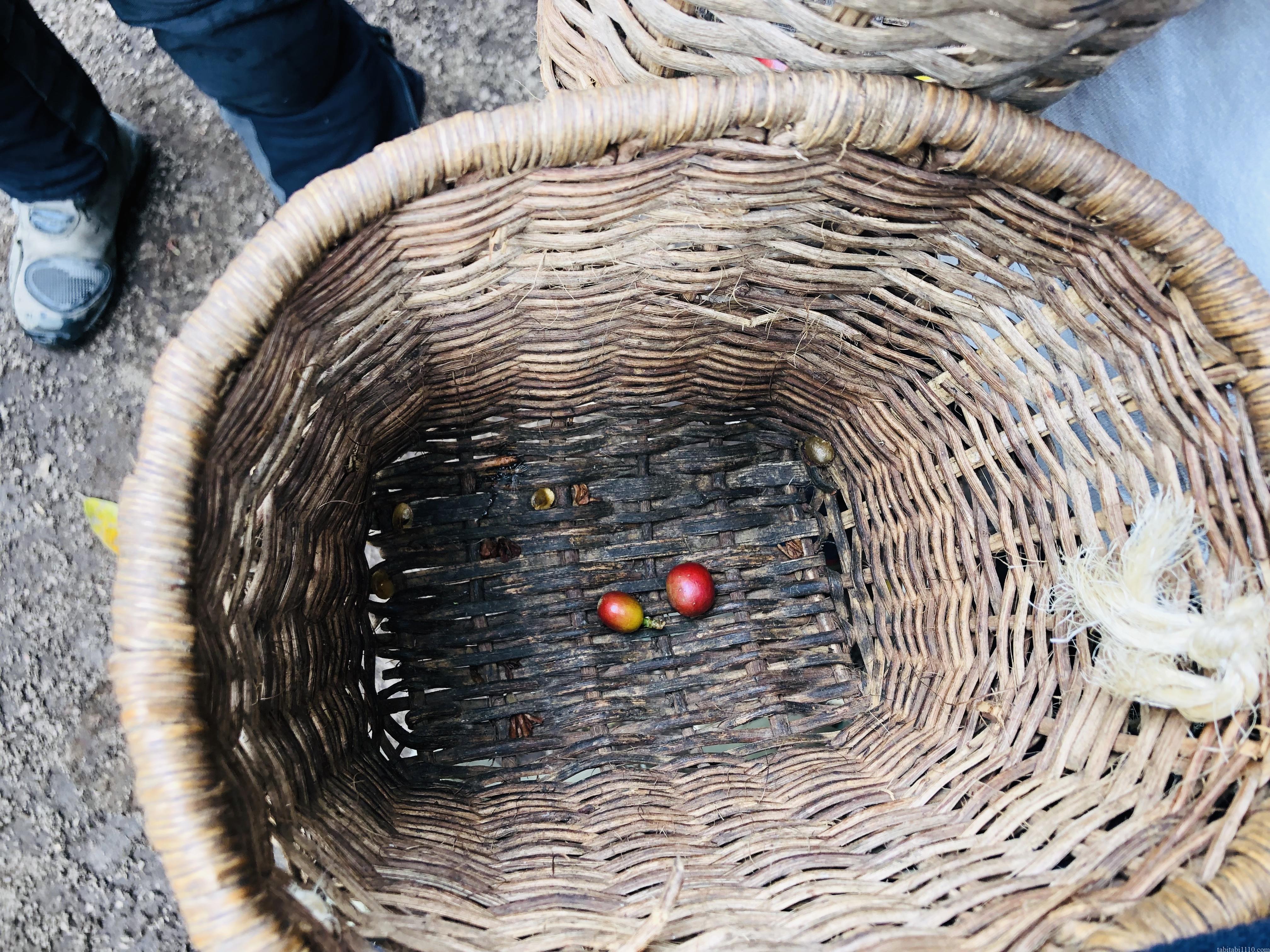 El Ocaso|コーヒー農園ツアー