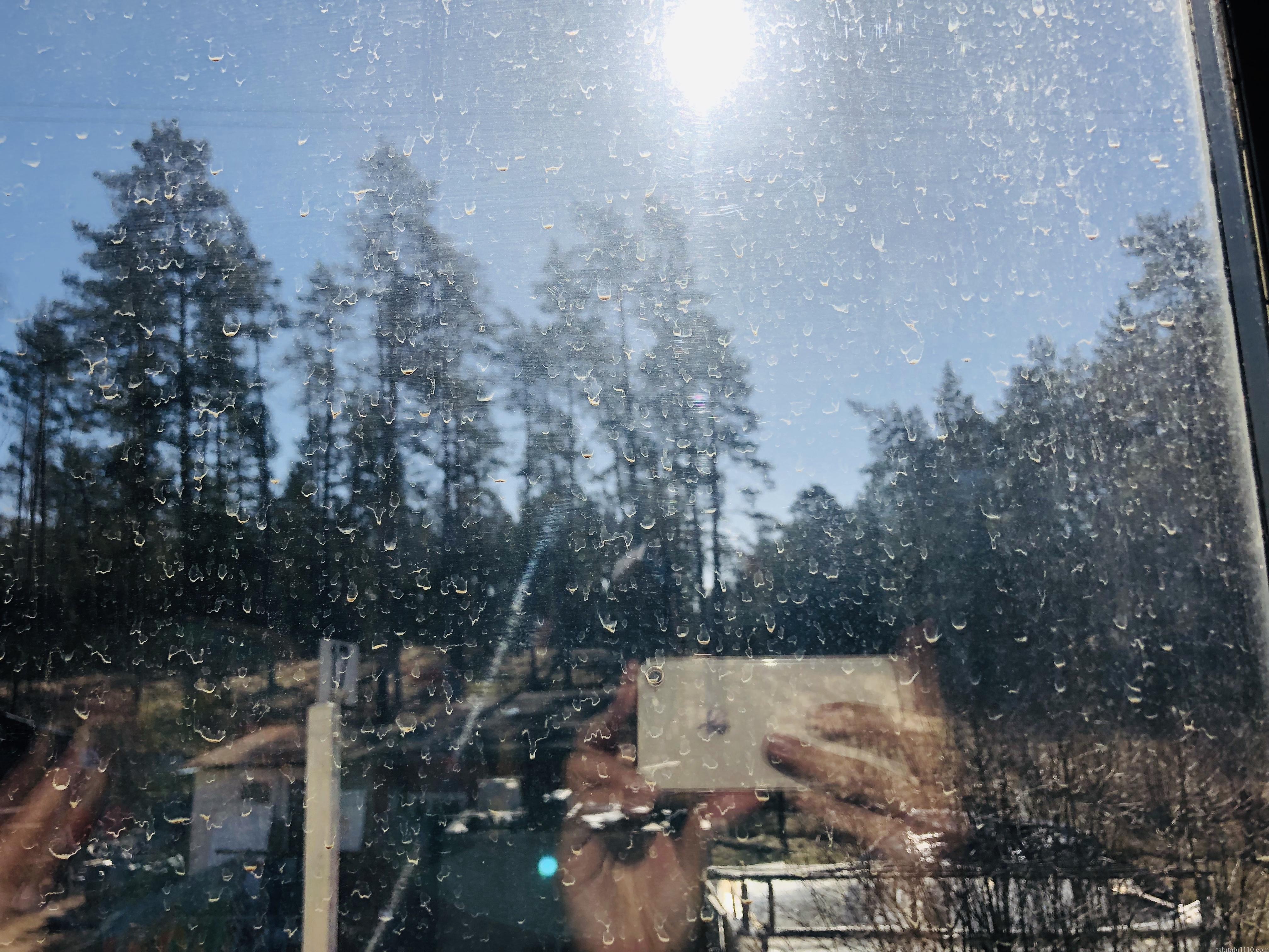 ラトビアの針葉樹林